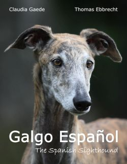 Galgo Español - The Spanish Sighthound